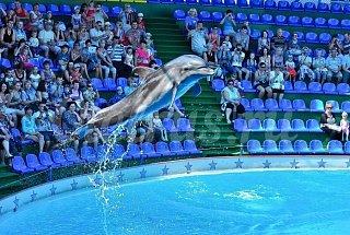 Дельфинарий в Курортном городке Адлера