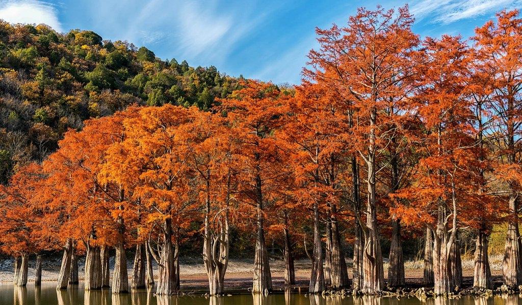 Кипарисы осенью в Сукко